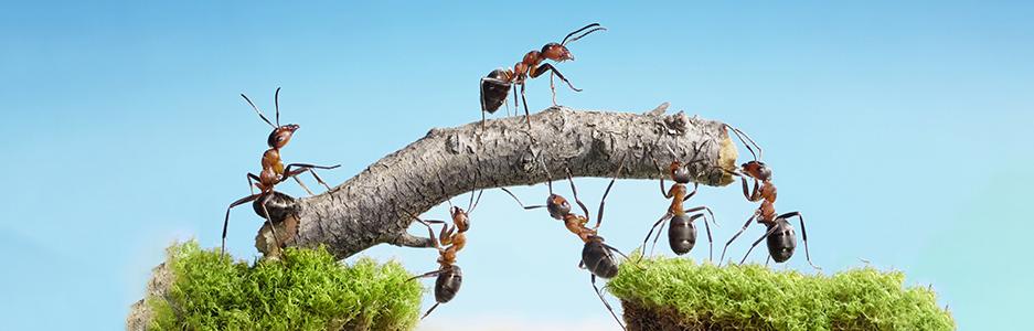 conheça-a-parábola-da-formiga-desmotivada-e-inspire-sua-equipe-de-trabalho